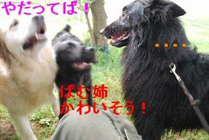 f0109202_22162762.jpg