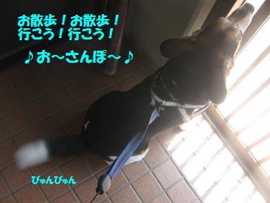 d0104209_20385445.jpg