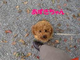 c0185516_21232069.jpg