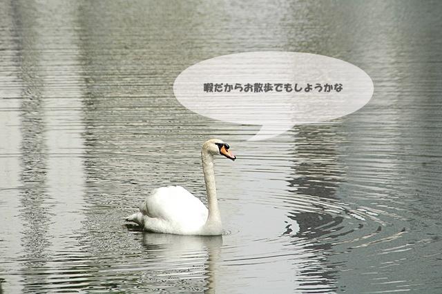 f0012718_2053596.jpg