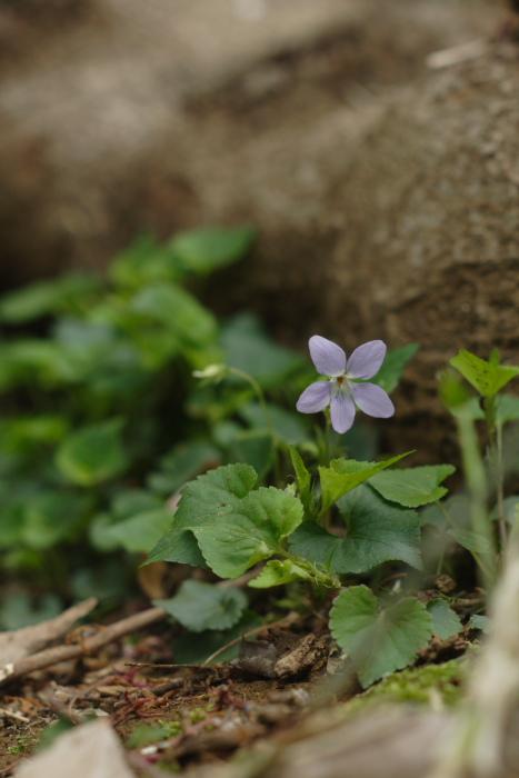 春来る_c0001429_0523393.jpg