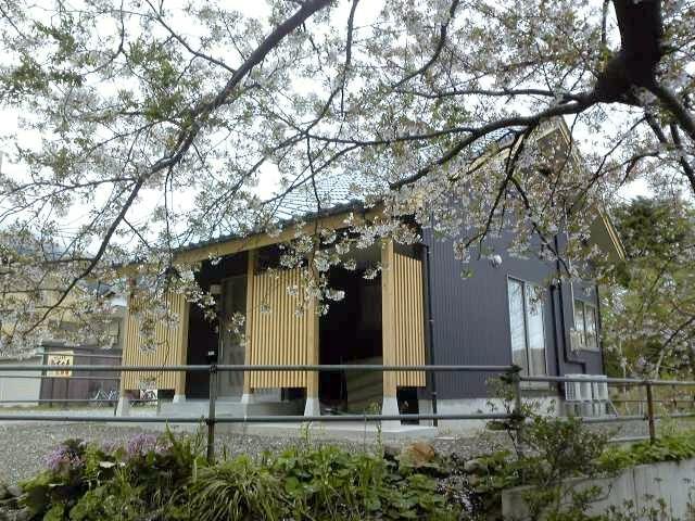 桜と弥彦の家_c0170940_19111855.jpg