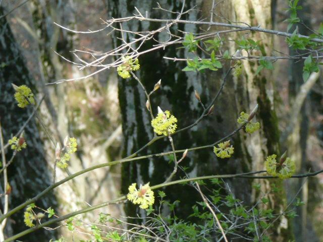標高 約800メートルの山を歩いて、野の花を愛でました♪_f0099147_0105130.jpg