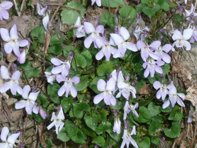 標高 約800メートルの山を歩いて、野の花を愛でました♪_f0099147_0252475.jpg