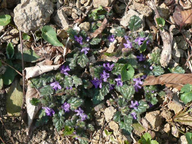 標高 約800メートルの山を歩いて、野の花を愛でました♪_f0099147_0254997.jpg
