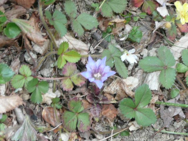 標高 約800メートルの山を歩いて、野の花を愛でました♪_f0099147_0262052.jpg