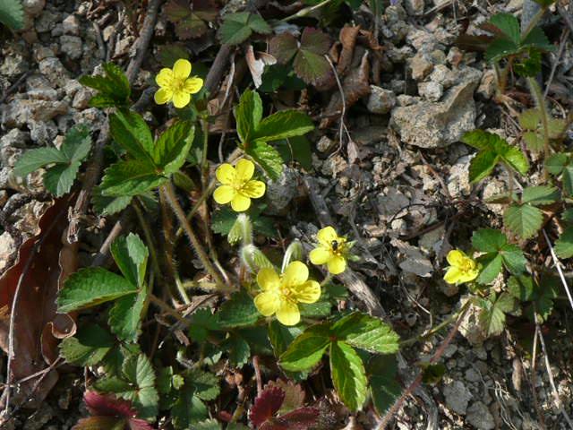 標高 約800メートルの山を歩いて、野の花を愛でました♪_f0099147_0271591.jpg