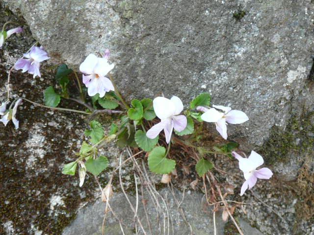 標高 約800メートルの山を歩いて、野の花を愛でました♪_f0099147_0285743.jpg