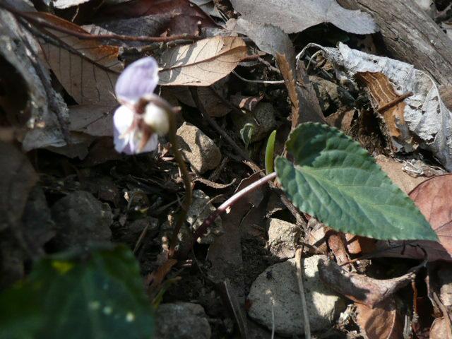 標高 約800メートルの山を歩いて、野の花を愛でました♪_f0099147_045168.jpg
