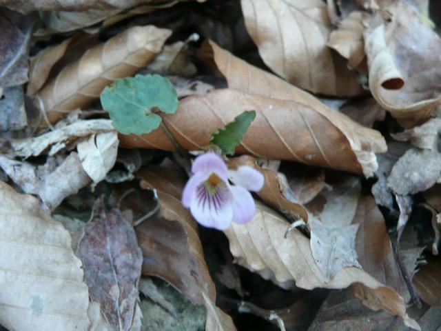 標高 約800メートルの山を歩いて、野の花を愛でました♪_f0099147_071082.jpg