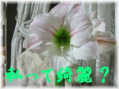 b0151748_9453385.jpg
