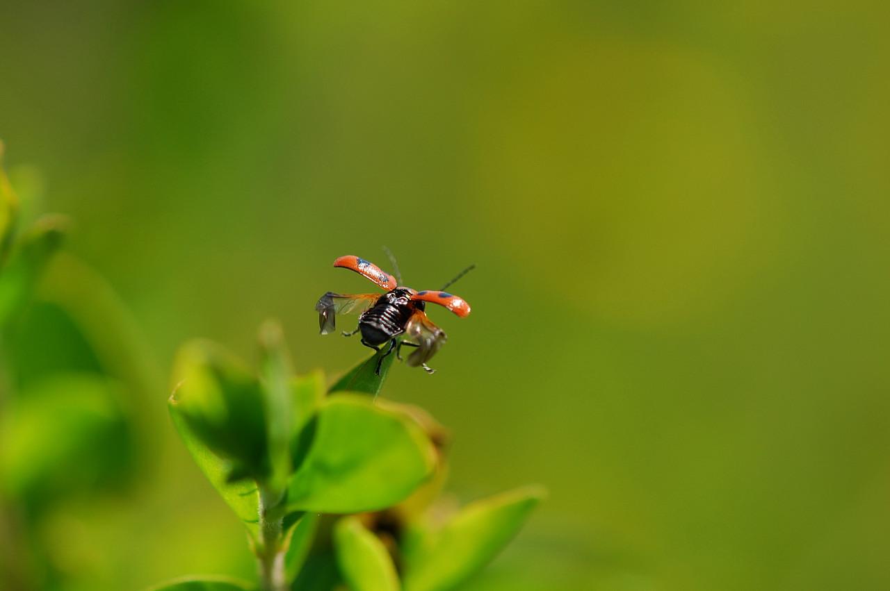 昆虫シーズンだぁ!_f0055257_19214372.jpg