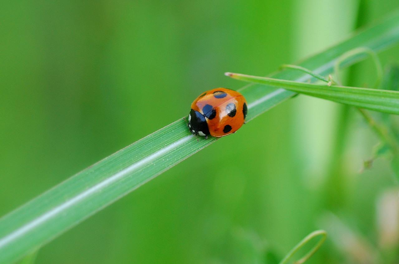 昆虫シーズンだぁ!_f0055257_1940549.jpg