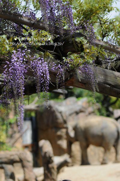 天王寺動物園をお散歩_b0024758_20273237.jpg