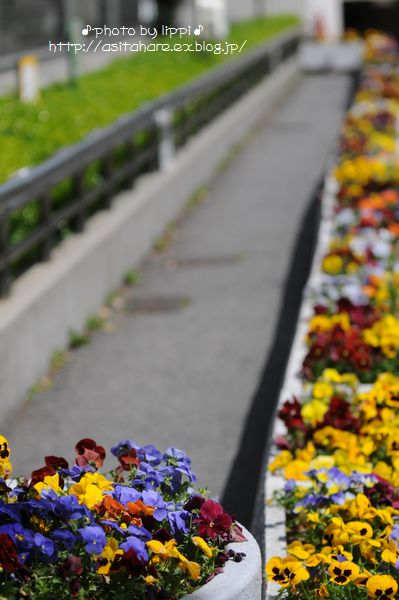 天王寺動物園をお散歩_b0024758_2030338.jpg