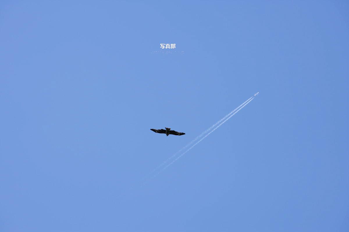 飛んで飛んで_f0021869_2128779.jpg