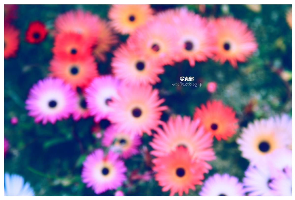 flowers_f0021869_21572261.jpg