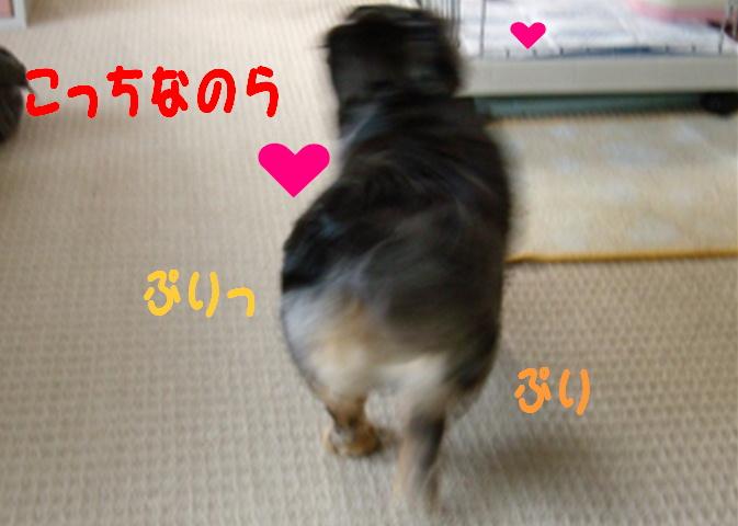 f0195891_17463671.jpg