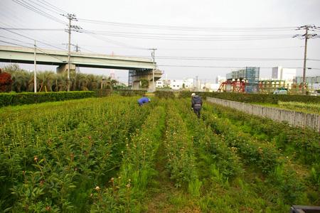 朝の収穫_f0162400_7194242.jpg