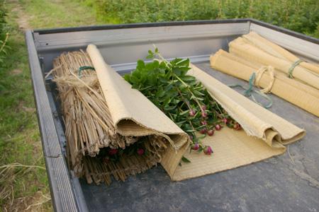 朝の収穫_f0162400_7195638.jpg