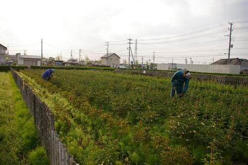 朝の収穫_f0162400_719962.jpg
