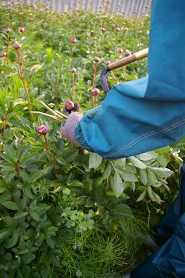 朝の収穫_f0162400_7205887.jpg