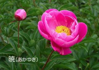 朝の収穫_f0162400_731840.jpg