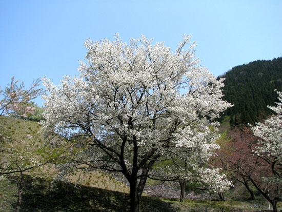 石田川ダム_e0048413_22125238.jpg