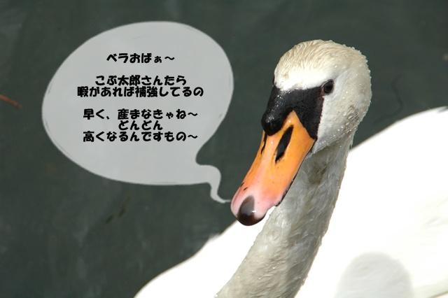 f0012718_10561976.jpg