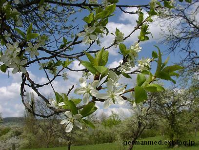 ドイツ春爛漫_d0144726_3372922.jpg