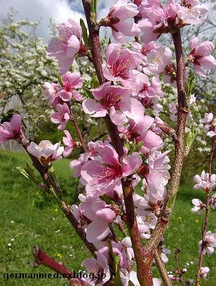 ドイツ春爛漫_d0144726_3381711.jpg