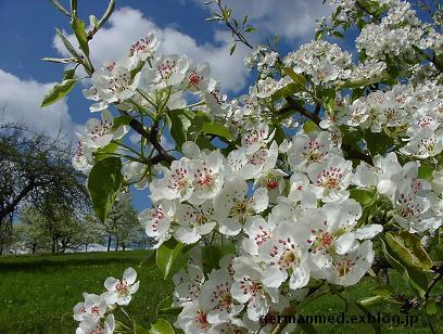ドイツ春爛漫_d0144726_3383964.jpg