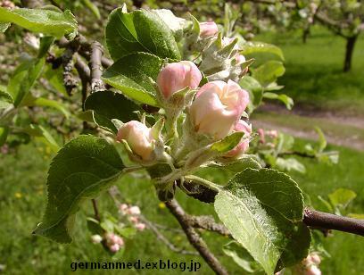 ドイツ春爛漫_d0144726_339242.jpg