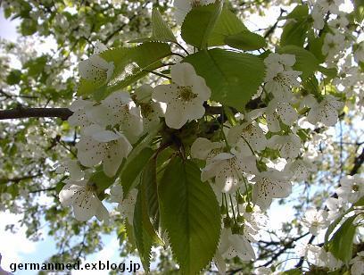 ドイツ春爛漫_d0144726_3393037.jpg