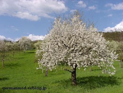 ドイツ春爛漫_d0144726_3395263.jpg