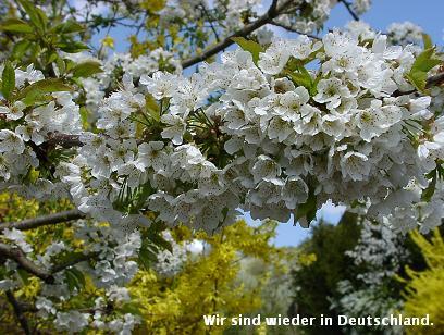 ドイツ春爛漫_d0144726_464485.jpg