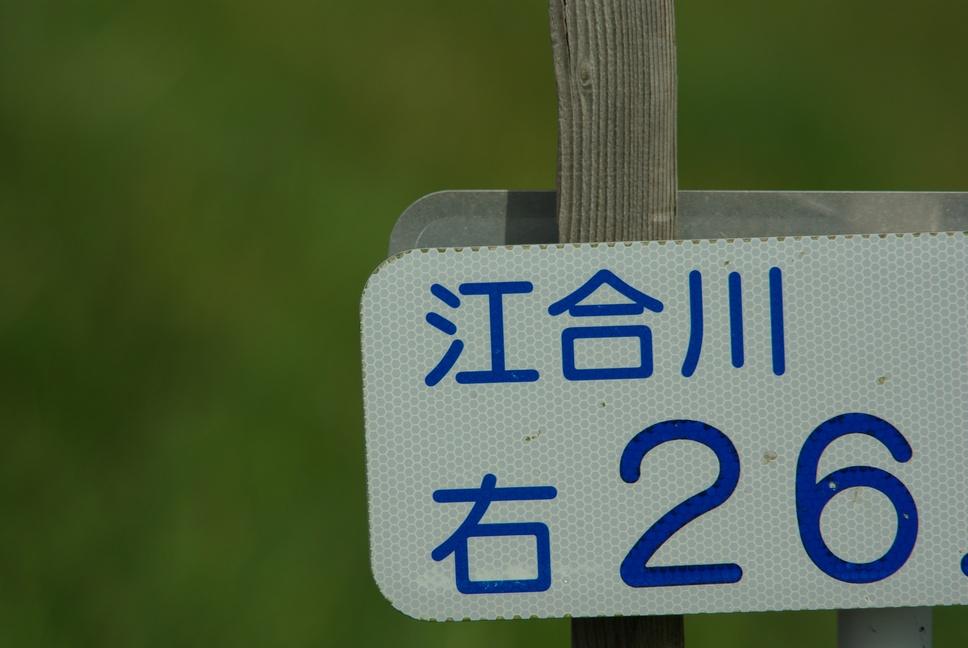 江合川の野鳥 その1_f0148627_2012547.jpg