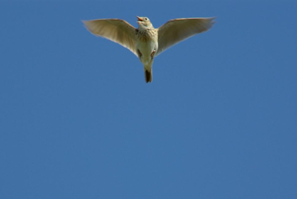 江合川の野鳥 その1_f0148627_20155848.jpg