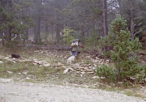 男が植えた木は_c0177135_21145510.jpg