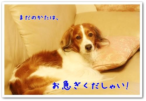 d0013149_1833856.jpg