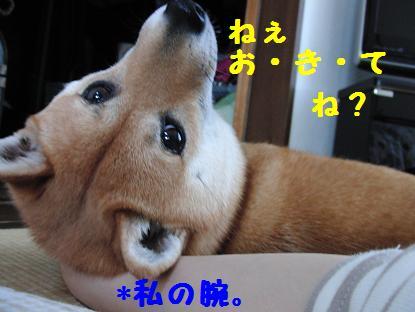 b0150665_17152490.jpg