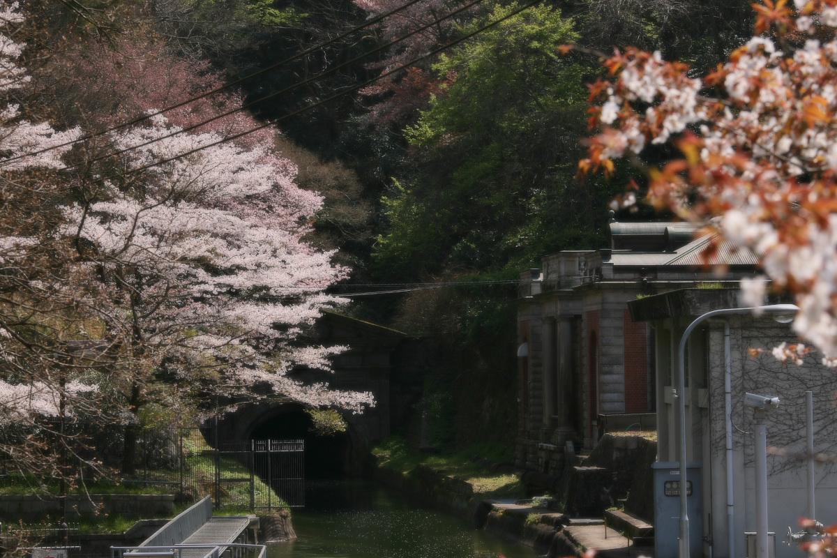 琵琶湖疏水~南禅寺 桜_f0021869_21134935.jpg