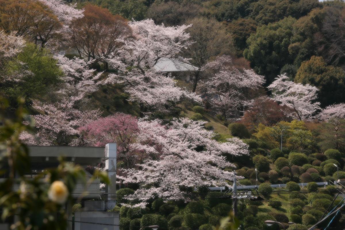 琵琶湖疏水~南禅寺 桜_f0021869_21143483.jpg