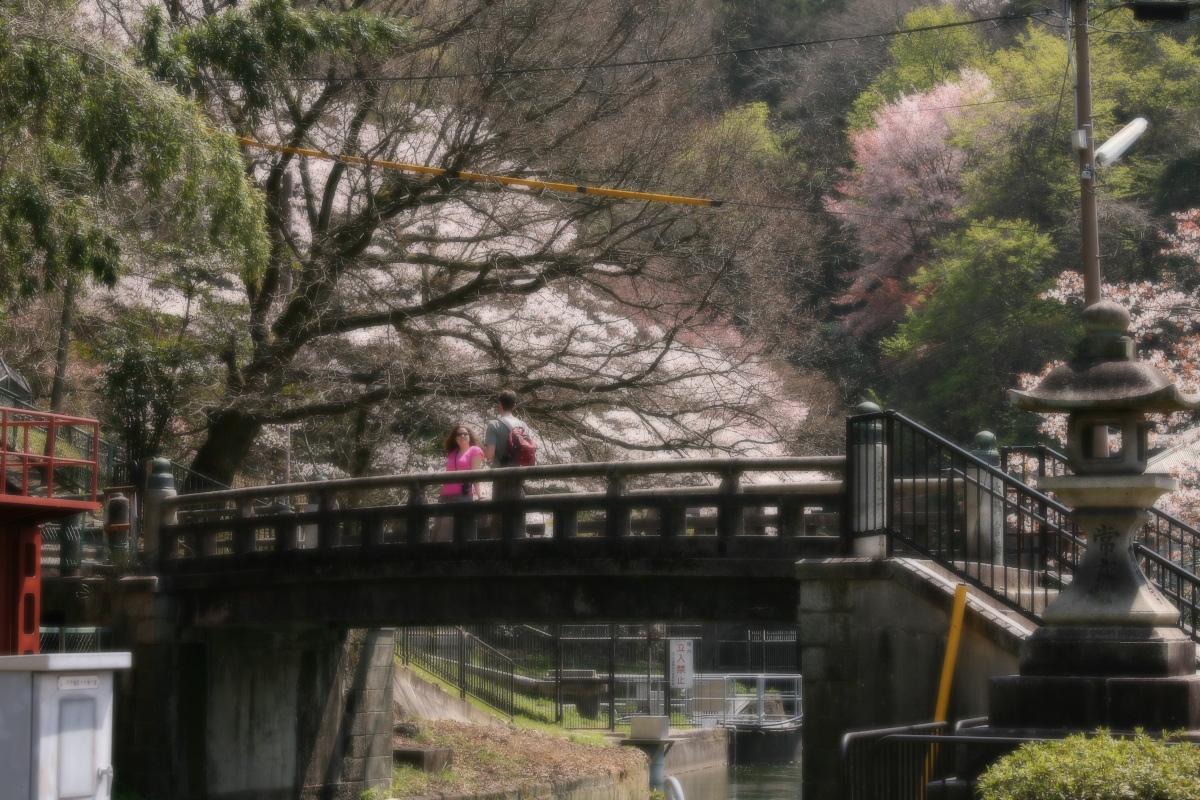 琵琶湖疏水~南禅寺 桜_f0021869_21145510.jpg