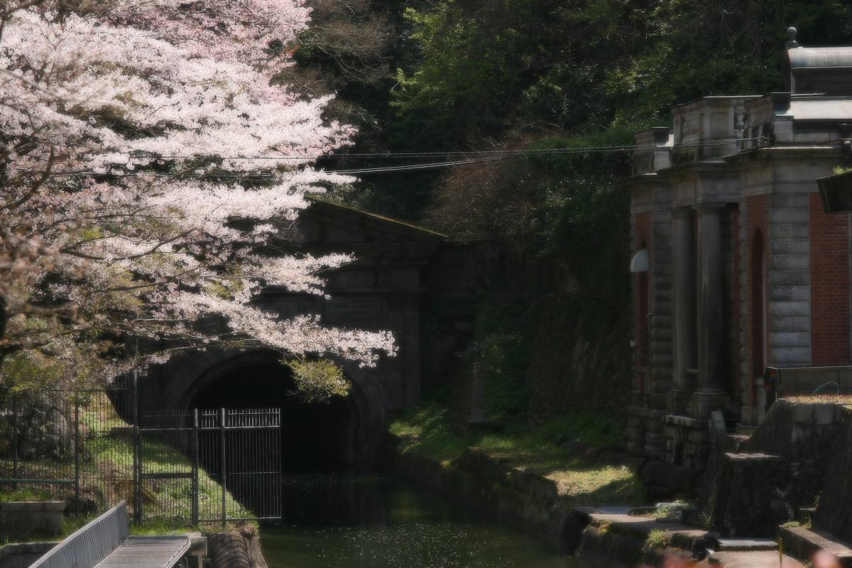 琵琶湖疏水~南禅寺 桜_f0021869_2114727.jpg