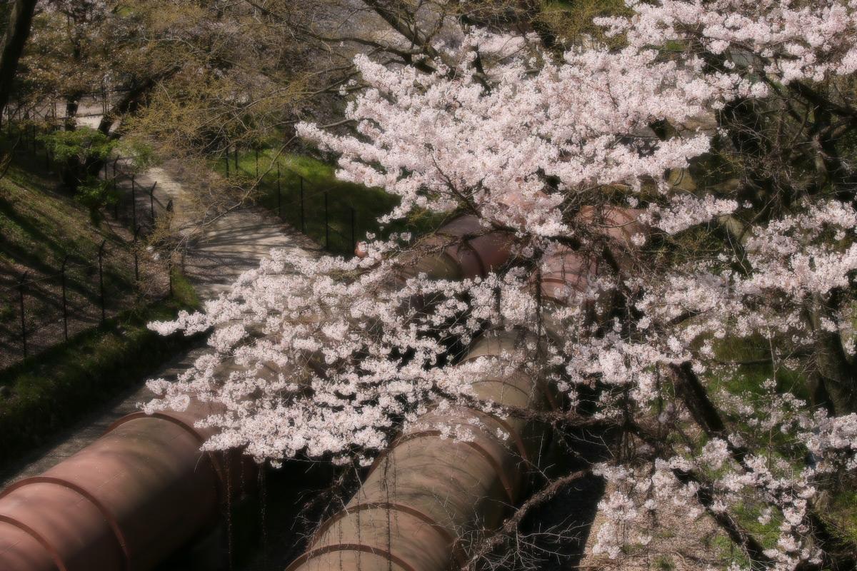 琵琶湖疏水~南禅寺 桜_f0021869_21153786.jpg