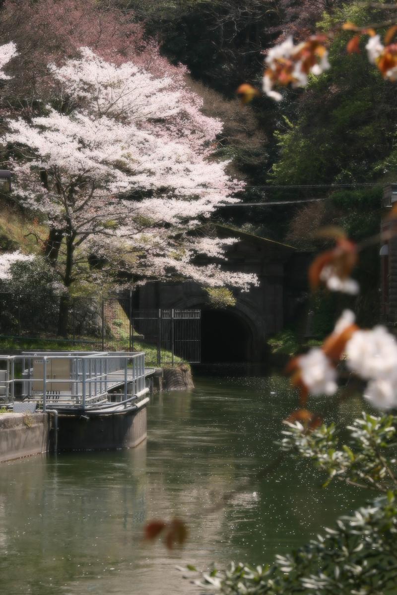 琵琶湖疏水~南禅寺 桜_f0021869_21172725.jpg