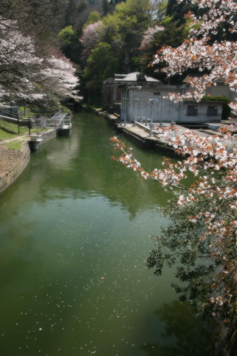 琵琶湖疏水~南禅寺 桜_f0021869_2117452.jpg
