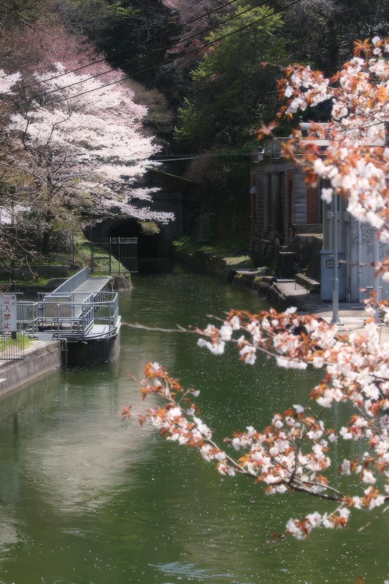 琵琶湖疏水~南禅寺 桜_f0021869_21182649.jpg