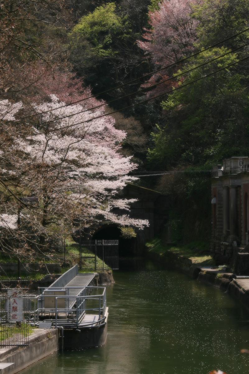 琵琶湖疏水~南禅寺 桜_f0021869_2118871.jpg
